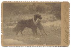 ca. 1870-90s, [cabinet card, portrait of a raccoon hugging a dog], Bracy via Capitol Gallery, Cabinet Cards & CDVs