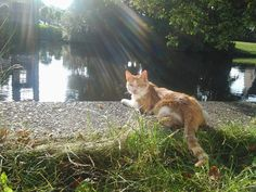 Cat in garden next to water in summer you're still reading this?