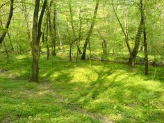 Google Image Result for http://stuffpoint.com/nature/image/47564-nature-forest-nature.jpg
