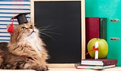 Cats... and education. Maybe sometimes in the future cats will become teachers or they'll graduate to collage?