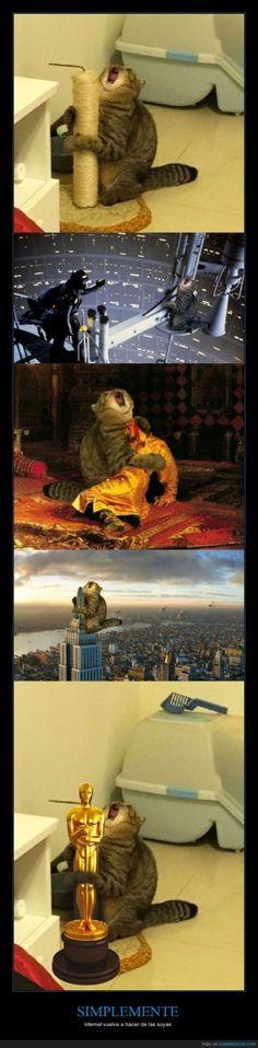 Este gato pide chops... ¡ Aquí los tienes - Internet vuelve a hacer de las suyas