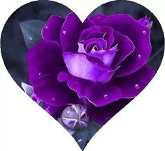 Purple Rose and Heart.