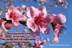 The dry seasons in life do not last.The Spring rains will come again. ~Sarah Ban Breathnach
