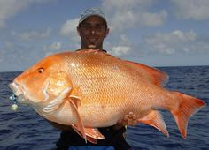 Image from http://lcboard.com.au/uploads/a/admin/1770-Fishing-Red%20Emperor~.jpg.