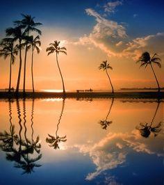 ....a palm tree reflection....