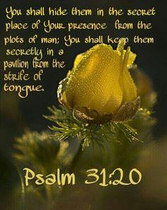 Psalm 31:20