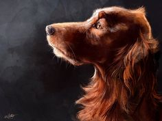 Irish Setter -L Watkins Painting of my Red Setter Meg. I really love a bit of lighting, had lots of fun painting those illuminated whiskers. She's not very well at the moment, and is tired of being drawn!