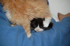 Kittens - Imgur