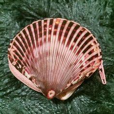 Seashell coin purse Really cute coin purse. Handmade. Bags Clutches & Wristlets