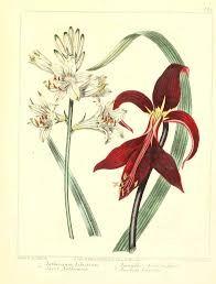Shop Vintage Botanical Poster - Orchid Flower created by LittleLittleDesign. Vintage Botanical Prints, Botanical Drawings, Botanical Art, Botanical Flowers, Vintage Paper Crafts, Plant Drawing, Art Images, Altered Art, Printable Art