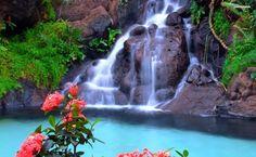 Beautiful waterfall and pink flowers HD Wallpaper