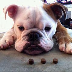 Waiting for treats