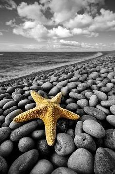 Android Wallpaper, Theme, Background of Starfish on the Beach for your Android Phones. Let's go to the beautiful island and beach for holidays. Beautiful World, Beautiful Places, I Love The Beach, Pretty Beach, Beautiful Beach, Foto Art, Ocean Beach, Pebble Beach, Beach Rocks