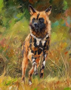 African Painted Wild Dog ~ Artist: David Stribbling