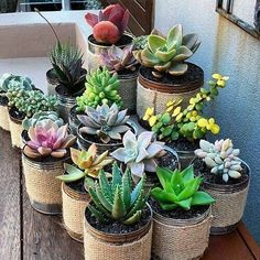 35 Lovely Small Cactus Ideas for Indoor: The market in cactus house plants is booming and with very good reason. These prickly little guys are great fun, […] Types Of Succulents, Cacti And Succulents, Planting Succulents, Planting Flowers, Succulents Wallpaper, Succulents Drawing, Propagating Succulents, Succulent Gardening, Succulent Terrarium