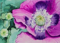 Purple Poppy - 2015 by Sue Flask ACEO Original Gouache Painting Card Flower Art #Miniature