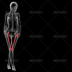 3d rendered illustration of the female femur bone ... ache, anatomy, arm, biology, body, bone, cage, carpal, chest, clavicle, cranium, female, femur, fibula, hip, human, humerus, illium, internal, ischium, joint, knee, male, man, mandible, medical, pain, patella, pelvis, person, phalanges, radius, render, rib, sacrum, scapula, shoulder, skeleton, skin, skull, spinal, spine, sternum, tibia, ulna, vertebrae, woman, x-ray