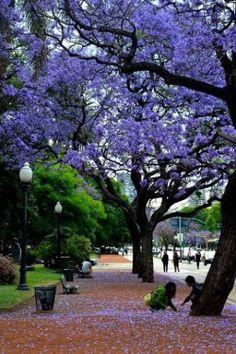 Buenos Aires..  (by Tiago Barbosa)