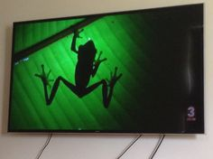 Frog on a leef