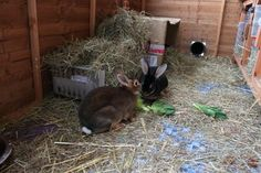 How to keep your rabbit warm in winter & cold weather. Care for rabbits & advice for pets inside or outside. Written by the Rabbit Welfare Association.