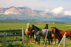 Horses and mountains.