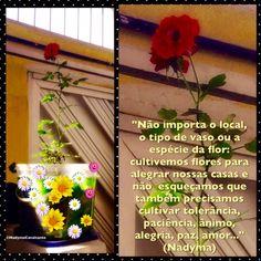 """""""Não importa o local, o tipo de vaso ou a espécie da flor: cultivemos flores para alegrar nossas casas e não esqueçamos que também precisamos cultivar tolerância, paciência, ânimo, alegria, paz, amor..."""" (Nadyma)"""
