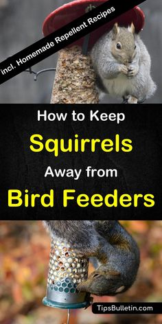 How to keep squirrels away from bird feeders - including recipes for DIY squirrel repellent spray. Covers DIY bird feeders and multiple alternative ways to repel squirrels from your hanging or pole bird feeder.