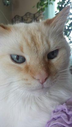 My handsome Stanley