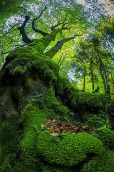 """Amazing Nature Photography That Will """"Wow' You Foto Nature, All Nature, Amazing Nature, Photos Of Nature, Nature Quotes, Nature Pictures, Magical Forest, Tree Forest, Dark Forest"""