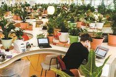Image result for second home lisboa Best Office Plants, Improve Productivity, Outdoor Furniture Sets, Outdoor Decor, Indoor Plants, Corner Desk, Instagram Posts, Liverpool, Home Decor