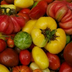 Organic Heirloom Tomato Seed Six Pack by cubits on Etsy, $20.00