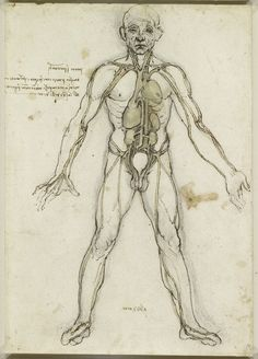 Drawing of Circulatory system, organs and vessels of an adult male. Leonardo da Vinci, made between 1485-1490.