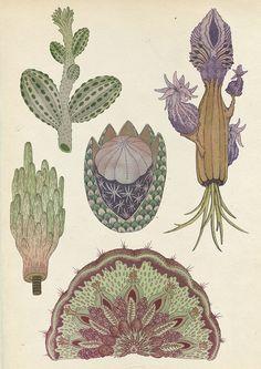 cacti | Katie Scott