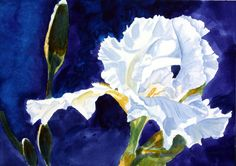 """""""Song of the Iris"""" ~ Watercolor on Paper ~ 11 x 14"""