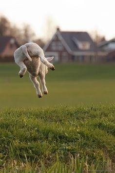 En als de zon ondergaat.......zweef je rustig naar de stal. Morgen weer een dag, vol nieuwe sprongen!
