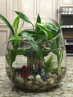 From growing just bamboo, to growing bamboo with an awesome beta named Yoshi:) Vom Anbau von einfach Planted Aquarium, Betta Aquarium, Mini Aquarium, Home Aquarium, Aquarium Design, Betta Fish Types, Betta Fish Tank, Beta Fish, Fish Tanks