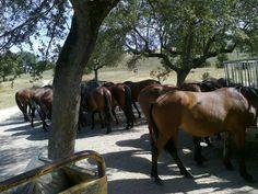 Alter Stud Farm  Alter do Chao  #Marvao #Alentejo #Portugal #Hotel #travel #BoutiqueHotelPoejo