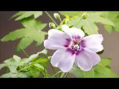 FLORA CANARIA. BREVE REPASO - YouTube