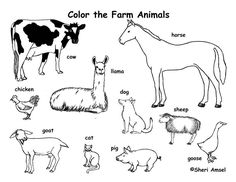 farm animal printables that actually look like the real animal learning about the farm. Black Bedroom Furniture Sets. Home Design Ideas