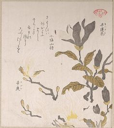 Magnolia Flowers  Kubo Shunman  (Japanese, 1757–1820)  Date: 19th century Culture: Japan Medium: Part of an album of woodblock prints (surimono); ink and color on paper