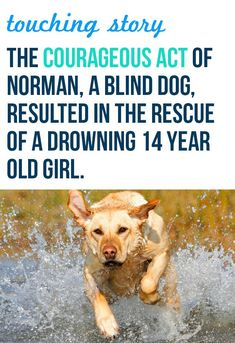 This labrador retriever is a true hero. What a miracle. #pets #touching
