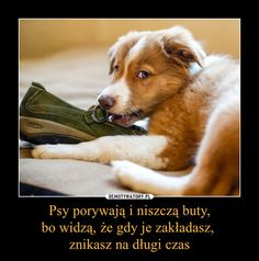Baby Animals, Funny Animals, Cute Animals, Dark Net, Everything And Nothing, Heart Melting, Wise Quotes, Dog Grooming, Best Memes