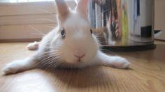 Bunny has a floor - May 28, 2012