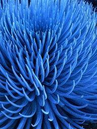 💘💘 BLUE 💘💘