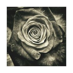 >>>Cheap Price Guarantee          	VINTAGE ROSE ~ Wrapped Canvas Art Stretched Canvas Prints           	VINTAGE ROSE ~ Wrapped Canvas Art Stretched Canvas Prints lowest price for you. In addition you can compare price with another store and read helpful reviews. BuyDeals          	VINTAGE ROSE...Cleck link More >>> http://www.zazzle.com/vintage_rose_wrapped_canvas_art-192357345562230191?rf=238627982471231924&zbar=1&tc=terrest