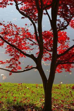 Rainbow Red  by Inga on Etsy