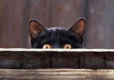 Kitty is peeking at you