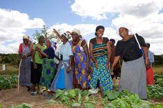 The women from the Chaitemura Chavakuseva group singing a song to welcome the visiting Progressio and Environemnt Africa team in Wedza, Zimbabwe 2011 (Photo © Jon Macpherson/ Progressio)