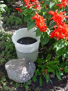 The outdoor mouse trap works by tricking the mouse into climbing into the bucket to eat sunflower seeds and instead falling into the water to drown. Bucket Mouse Trap, Rat Traps, Water Bucket, Mouse Traps, Things To Know, Country Living, Poultry, Seeds, Mice