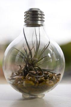 Light Bulb Terrarium Modern Design Meets Nature door tinyterra